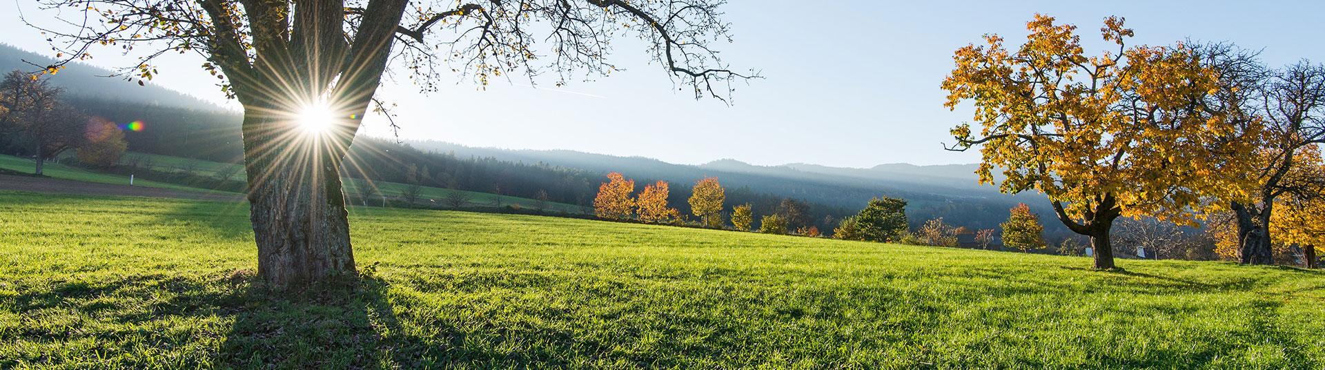 Hirschbirnen Herbst